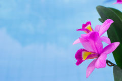 Purple Orchid. The beautiful purple orchid with blue sky stock photo