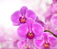 Purple orchid Stock Photo