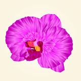 Purple Orchid beautiful flower polygons isolated  vector abstract illustration Royalty Free Stock Photography