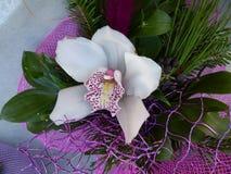 Purple Orchid Stock Photos