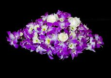Purple orchid on black Stock Photo