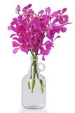 Purple orchid in bottle Royalty Free Stock Image