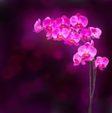Purple orchid branch Stock Photo