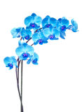 Purple orchid branch. Blue  orchid branch isolated on white background Stock Photo