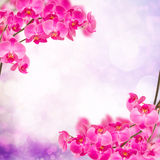 Purple orchid branch frame Royalty Free Stock Photos