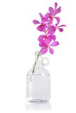 Purple orchid bunch Royalty Free Stock Images