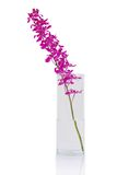 Purple orchid bunch Royalty Free Stock Image