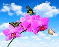 Purple orchid with butterflies Stock Images