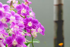 Purple Orchid. Colorful Purple Orchid Flower In The Garden Royalty Free Stock Photos