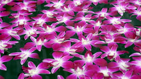 Purple orchid floating in water abstract spa relaxation Stock Images