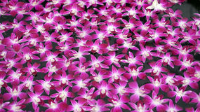 Purple orchid floating in water abstract spa and relaxation Stock Image