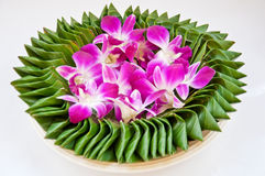 Purple orchid flower on banana leaf Royalty Free Stock Images