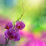 Purple orchid flower on blur background Stock Photography