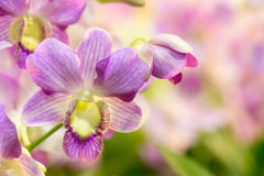 Purple orchid flower with colourful background Royalty Free Stock Photography