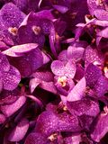 purple orchid flower in a floral arrangement, background and texture royalty free stock image