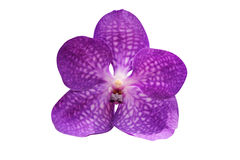 Purple orchid flower isolated on white Stock Images