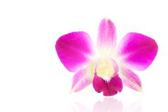 Purple orchid flower isolated on a white background Stock Photography