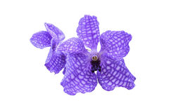 Purple orchid flower isolated on white background with cliping m. Ask Stock Photography