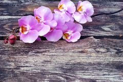 Purple orchid flower on old wood planks Royalty Free Stock Photo