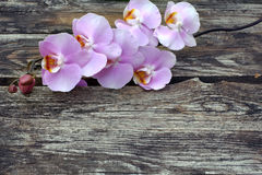 Purple orchid flower on old wood planks Stock Photos