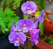 Purple orchid flower Stock Image