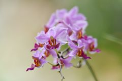 Purple orchid flower with pistils of red and yellow stock photography