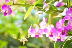 Purple Orchid. Flower on soft pink and green nature background Stock Images
