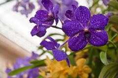 Purple orchid flowers Stock Photography