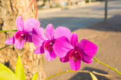 Purple orchid flowers Royalty Free Stock Image