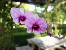 Purple Orchid Flowers Stock Image