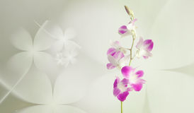 Purple orchid flowers on floral background Royalty Free Stock Image