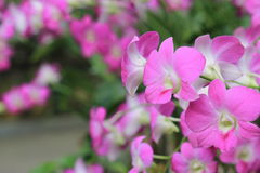 Purple orchid flowers in the garden in summer. stock photo