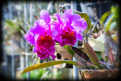 Purple orchid flowers, Holga color Effects Stock Photos