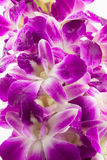 Purple orchid flowers. Isolated on white background stock photos