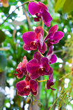 Purple Orchid Flowers on Leaves Background Royalty Free Stock Image