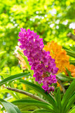 Purple orchid flowers orchid flowers Royalty Free Stock Photo