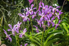 Purple orchid flowers orchid flowers Stock Photography