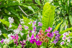 Purple orchid flowers orchid flowers Stock Photo