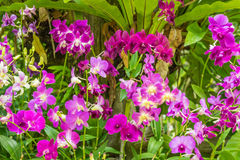 Purple orchid flowers orchid flowers Stock Images