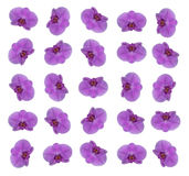 Purple orchid flowers pattern. A pattern of single purple orchid flowers Royalty Free Stock Images