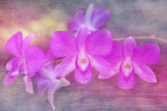 Purple orchid flowers in soft and blurred style with mulberry paper texture Stock Photo