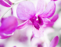 Purple orchid flowers on tree Royalty Free Stock Photo