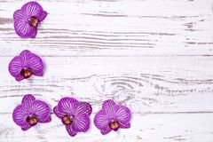 Purple orchid flowers on white wooden table, top view Stock Photo