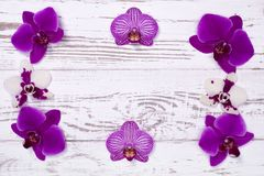 Purple orchid flowers on white wooden table, top view Royalty Free Stock Image