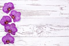 Purple orchid flowers on white wooden table, top view Stock Photography