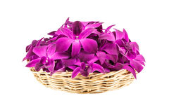 Purple orchid flowers in wicker basket Royalty Free Stock Images