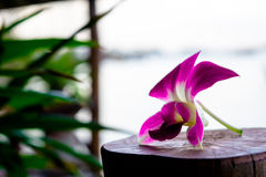A purple orchid. Purple flowers on a wooden pole Stock Images