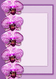 Purple orchid frame Royalty Free Stock Image