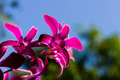 Purple orchid in the garden Stock Image