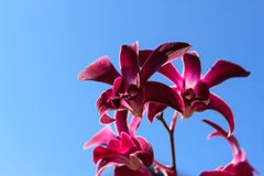 Purple orchid in the garden Royalty Free Stock Photography
